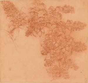 Leonardo da Vinci, A branch of blackberry, c.1506-12, Royal Collection Trust/© Her Majesty Queen Elizabeth II 2018